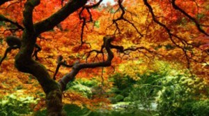 arbre-couleur-automne