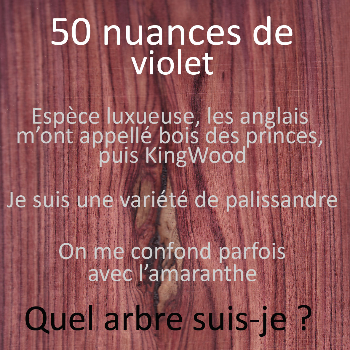 Quiz essences de bois 50 nuances de violet ecoute le bois - Les nuances de violet ...