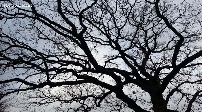 citation arbre branches au ciel