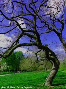 arbres tortueux Bagatelle
