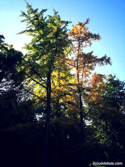sylvothérapie arbres ecoutelebois