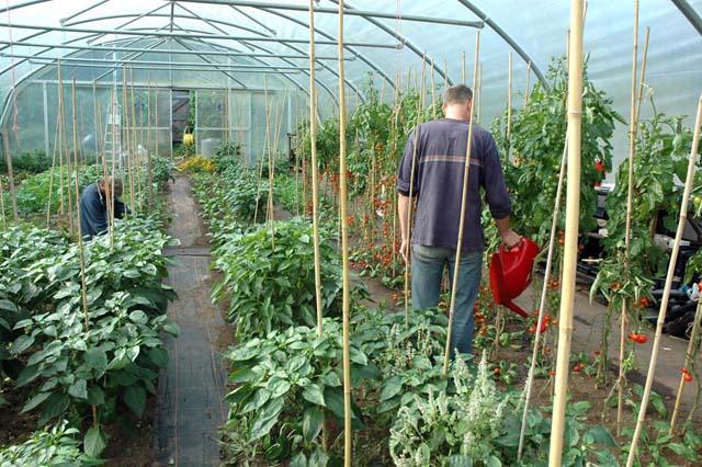 Fresh Gardens Greenhouse