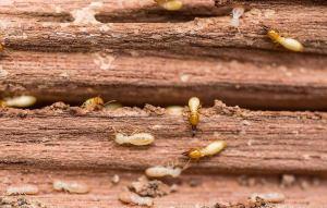 termite control miami