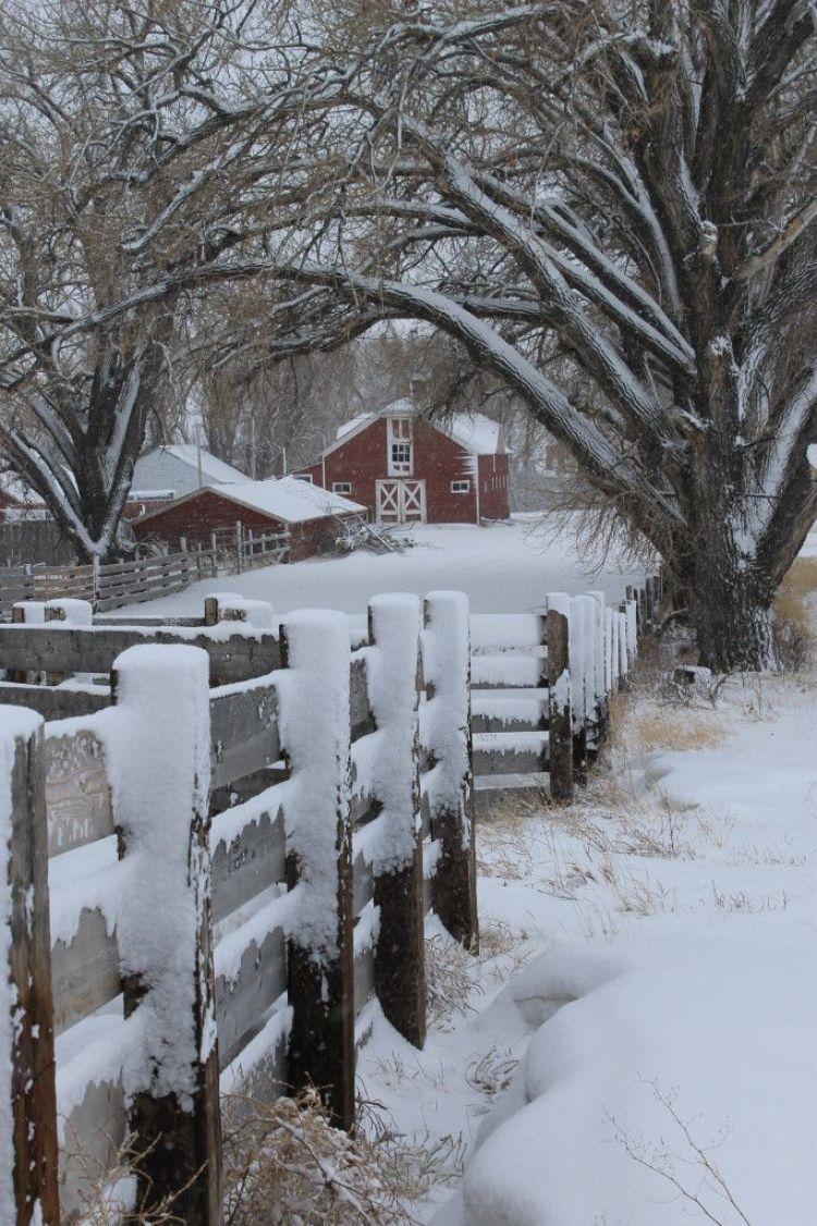 Driving Down a Snowy Lane