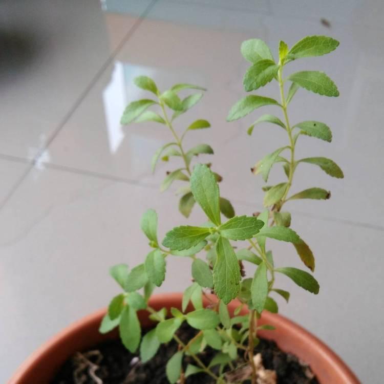 🌱🌱🌱🌿🌿🌿 DIY Herbs Garden Ideas for Kitchen