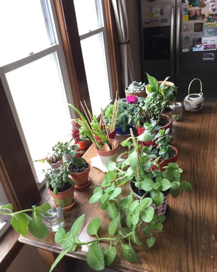 46 Incredibly Simple DIY Herbs Garden Ideas for Kitchen
