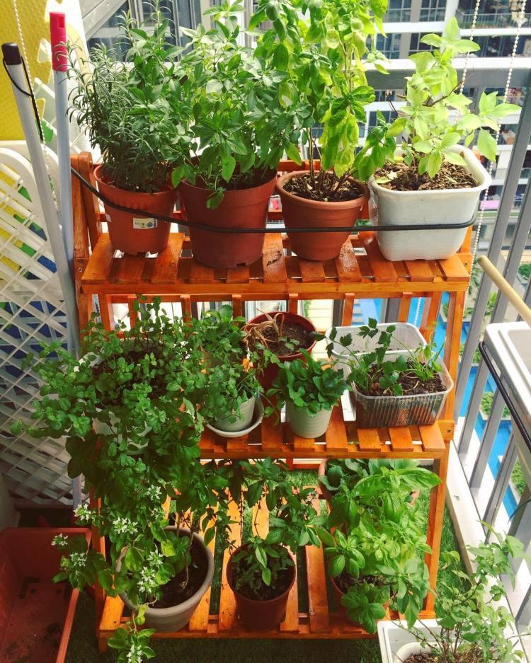 #gardening #herbs #herbsgarden #smallgarden #mygarden #garden