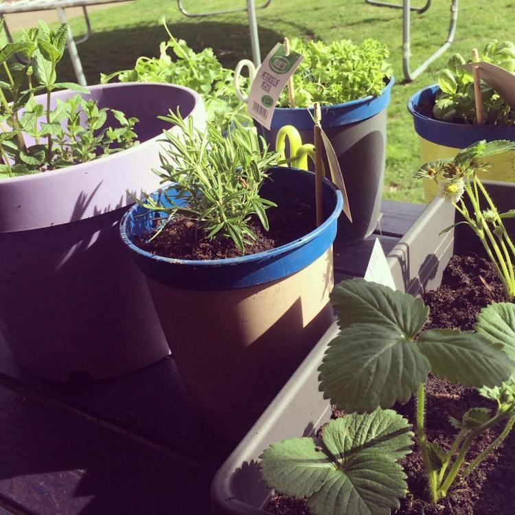 #herbsgarden #spring