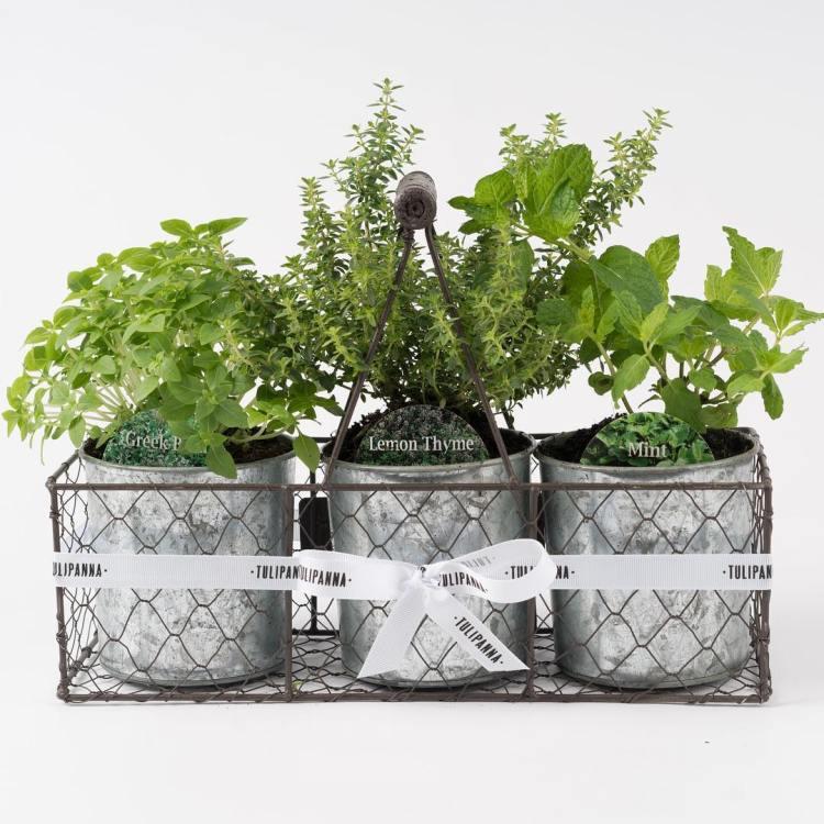 #herbsgarden #veggiegarden