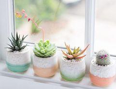 #home #decor #decorinspiration #planters #indoorplanters #pastelplanters #dallavita #instagood #instalove