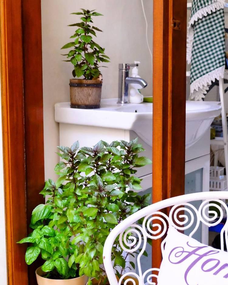 #relaxation #decoration #homedecor #plant #plants #plantsofinstagram #vintagedecor #ilovevintage