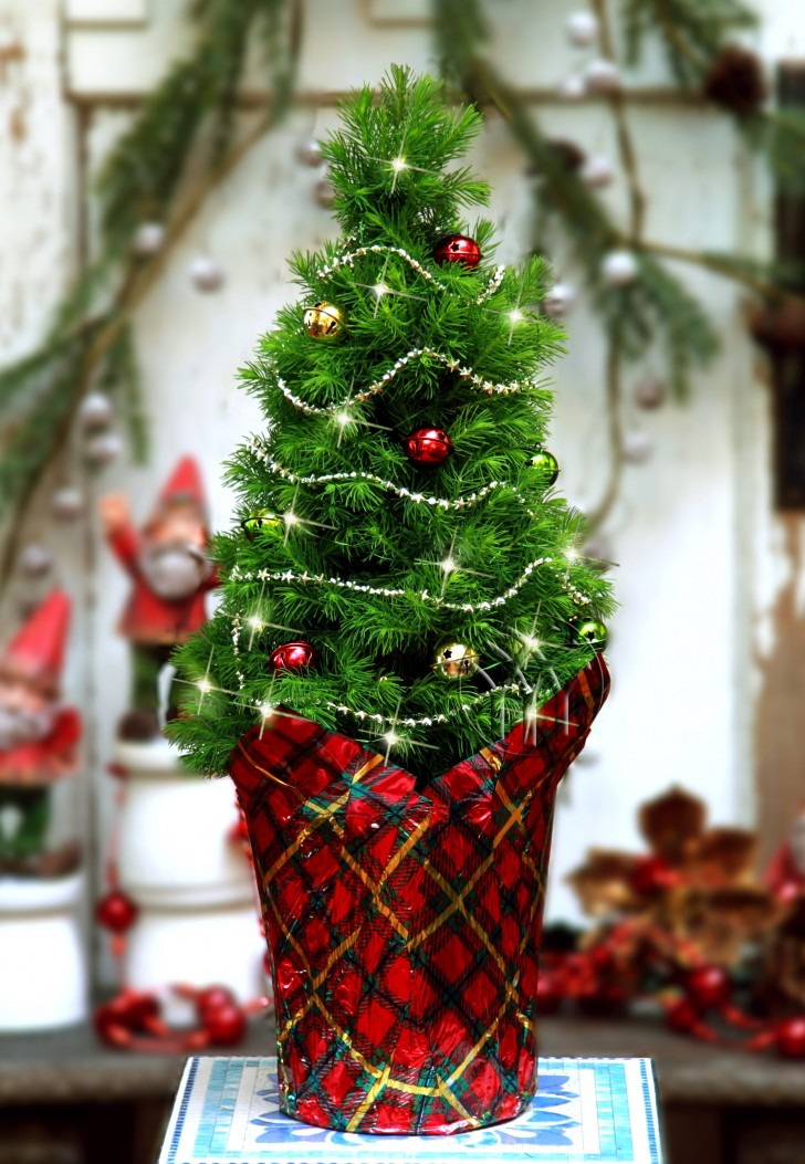 35 Picture-Perfect Christmas Tree Ideas You Have Never ...