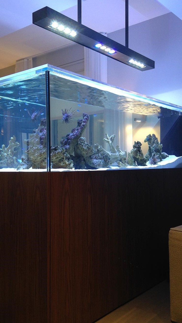 Beautiful aquarium