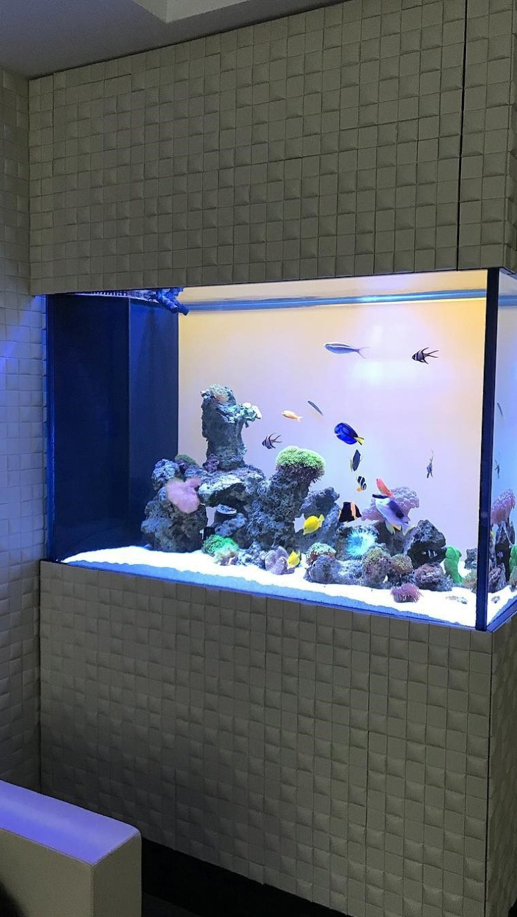 Checking in on this reef aquarium on Broadway
