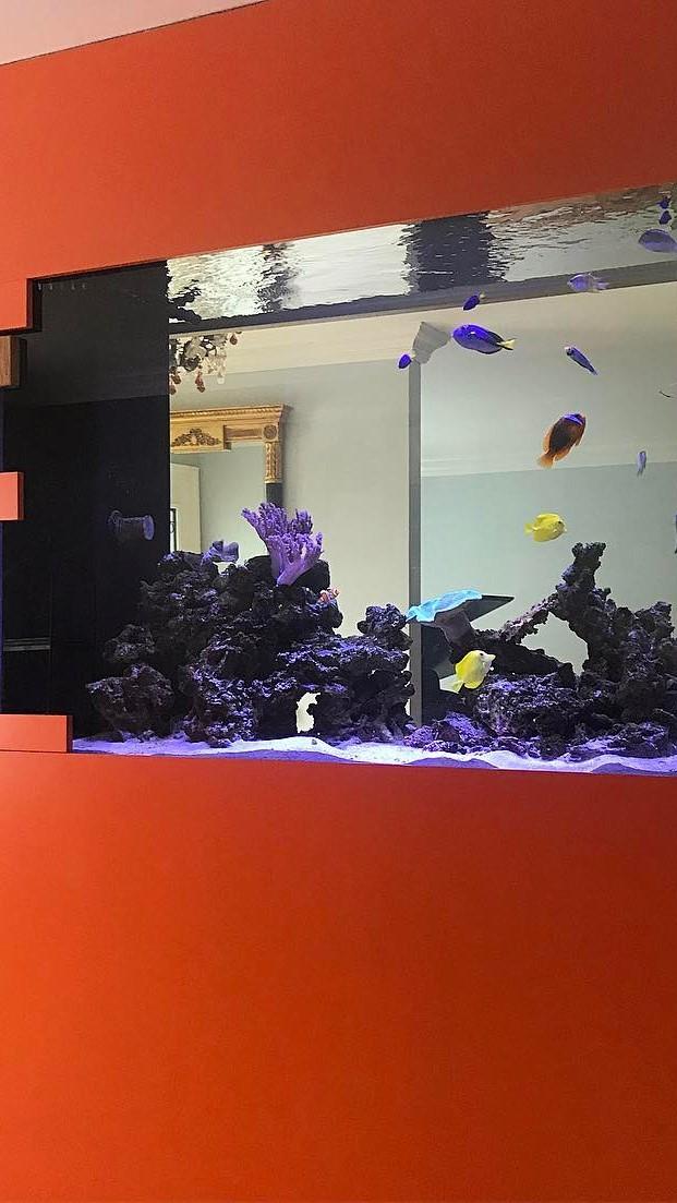 Looking awesome Aquarium