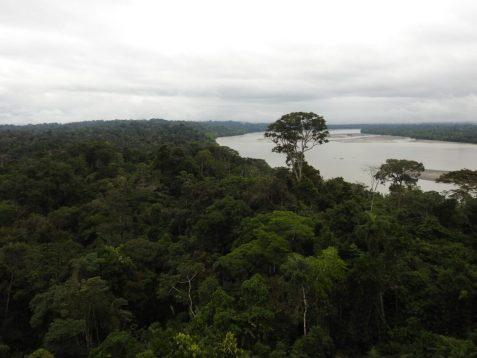 http://www.ecuadorecoadventures.com/product/yasuni-rainforest-tour/