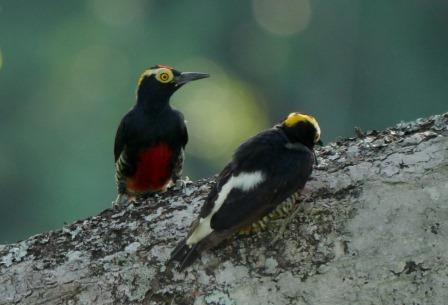 Napo Birding Trip