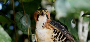 The Birds of the Rainforest in Ecuador