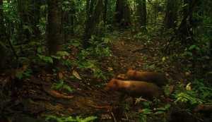 Yasuni National Wildlife