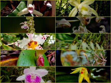 Principal Generas of Orchids found in Ecuador