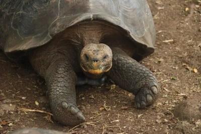 galapagos-turtle-01