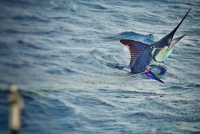 20161011-marlinfishing03