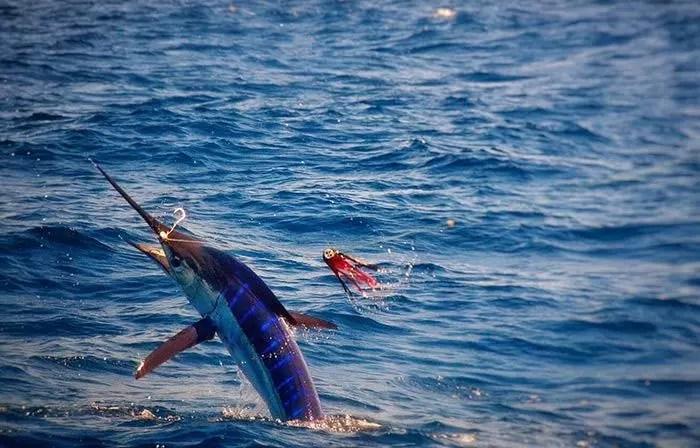 20161011-marlinfishing04