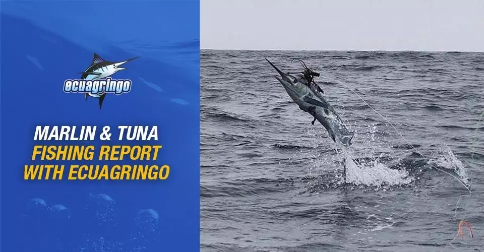 Marlin & Tuna Fishing Report with Ecuagringo