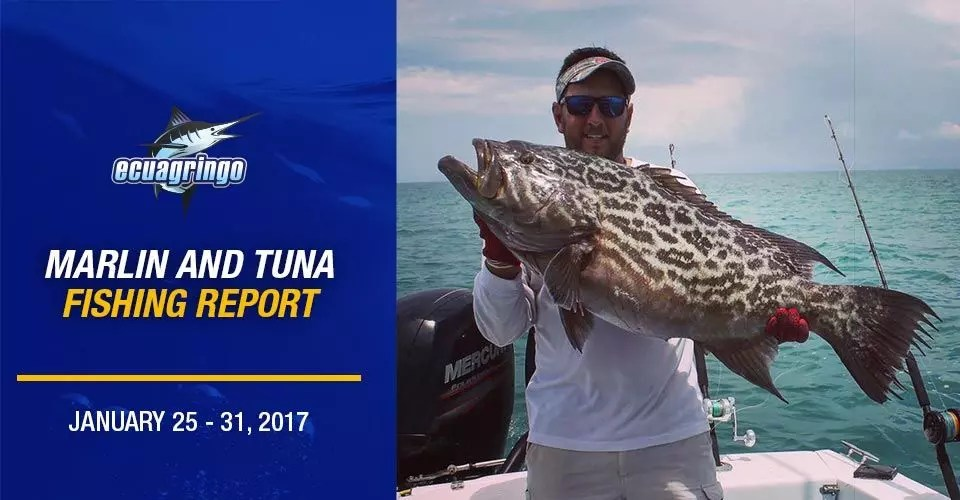 Ecuagringo Marlin & Tuna Fishing Report