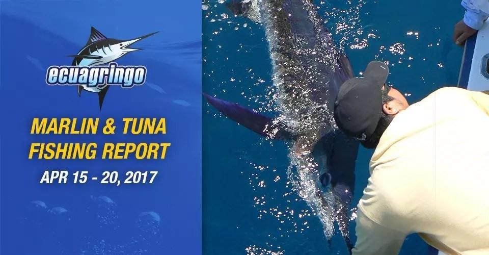 Marlin & Tuna Fishing Report, April 15-20, 2017