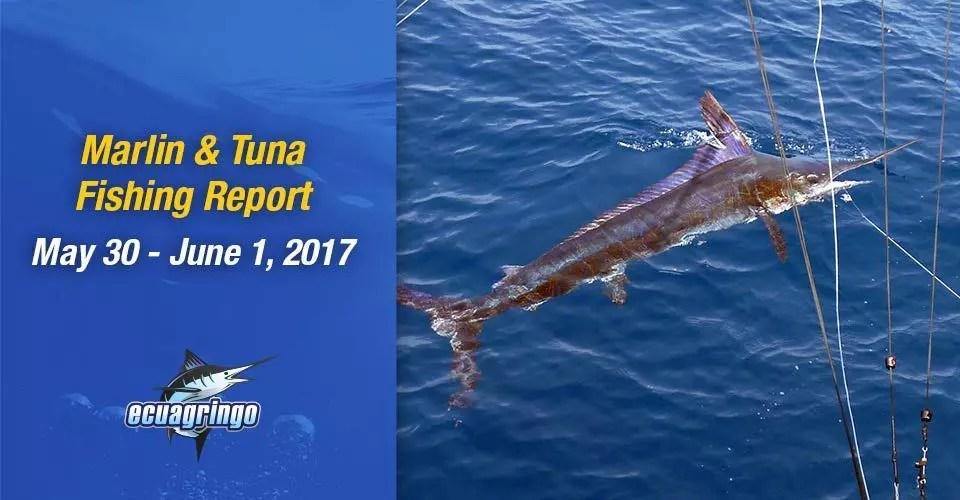 Ecuagringo Marlin & Tuna Report, May 30 – June 1, 2017