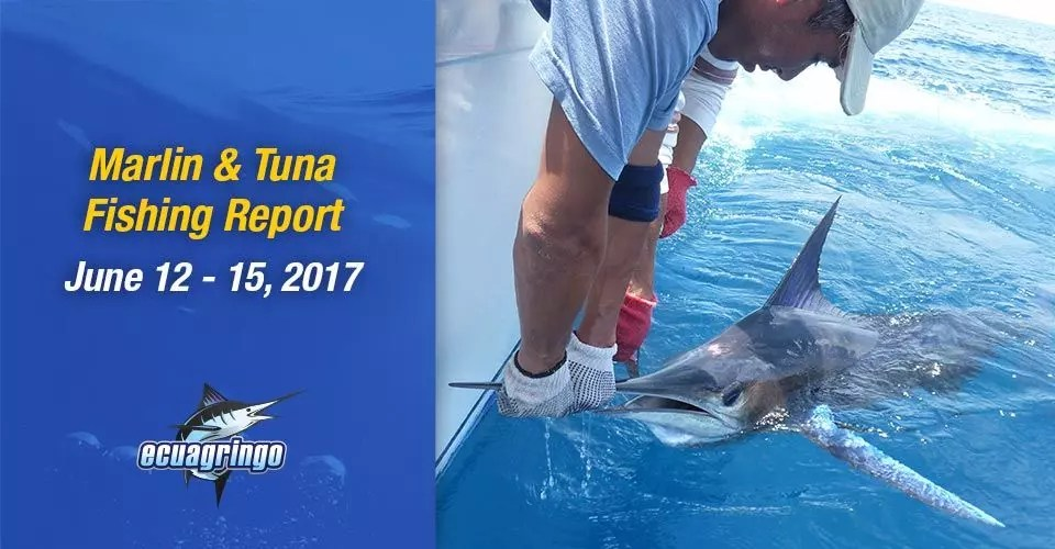 Marlin & Tuna Fishing Report, June 12-15, 2017