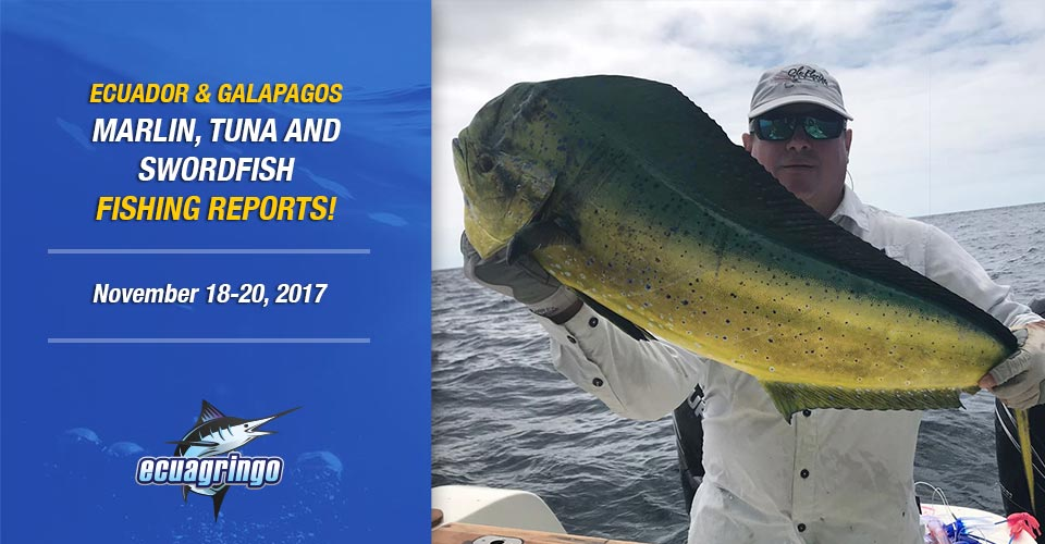 Galapagos has been quite rough but very productive on mahi-mahi on fly lately