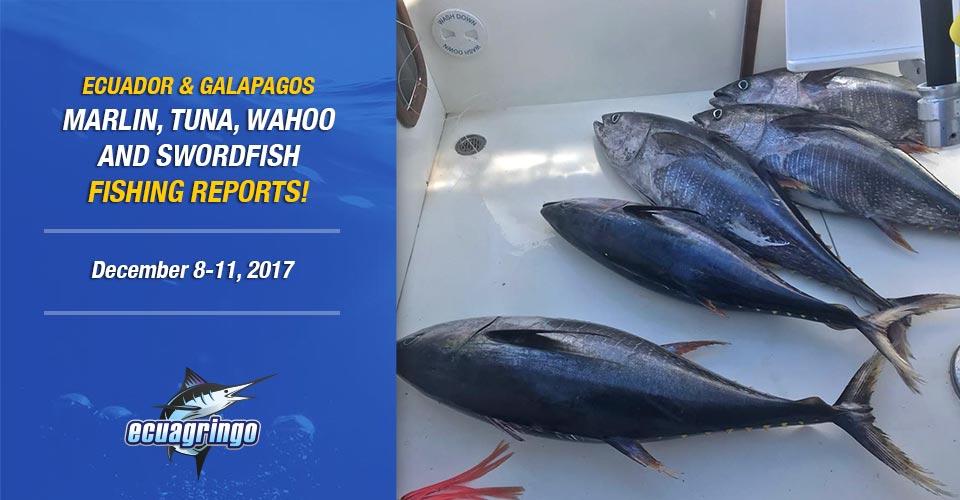 Wahoo & Tuna Explosion