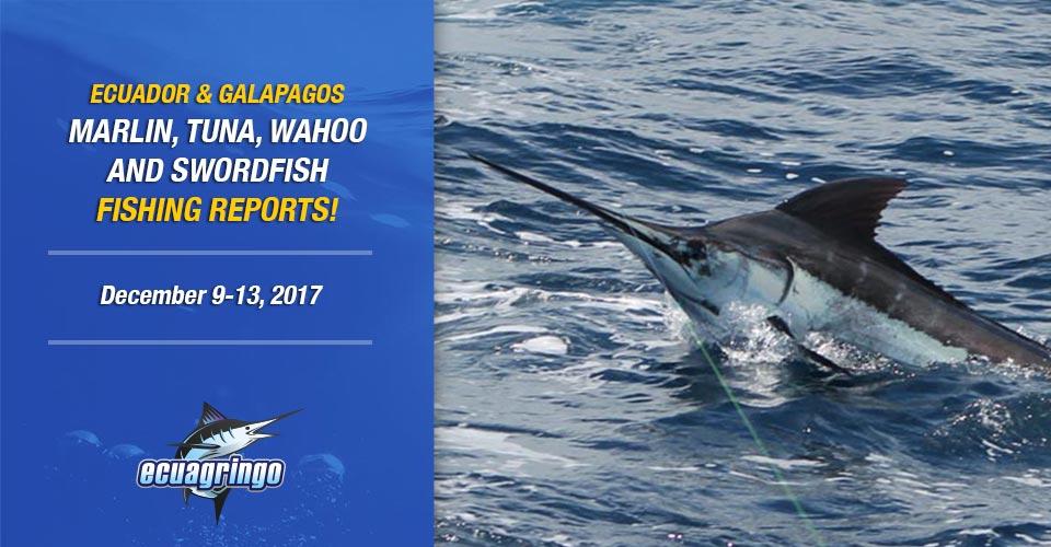 Manta Blue Marlin Blitz