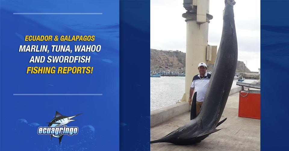Manta, Ecuador Delivers Christmas Eve Grander Blue Marlin!