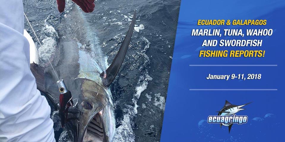 Incredible Marlin Bite Ecuador & Wahoo In Galapagos