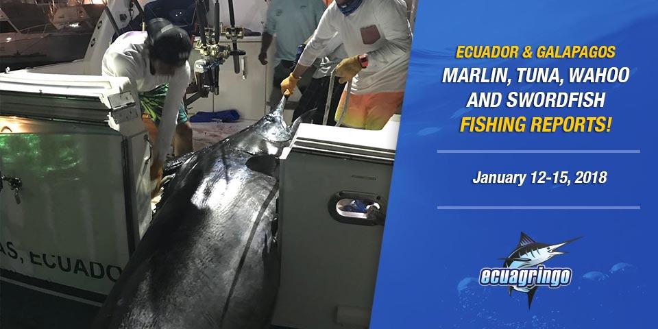 Ecuador On Fire With Blue & Striped Marlin Nonstop Action!
