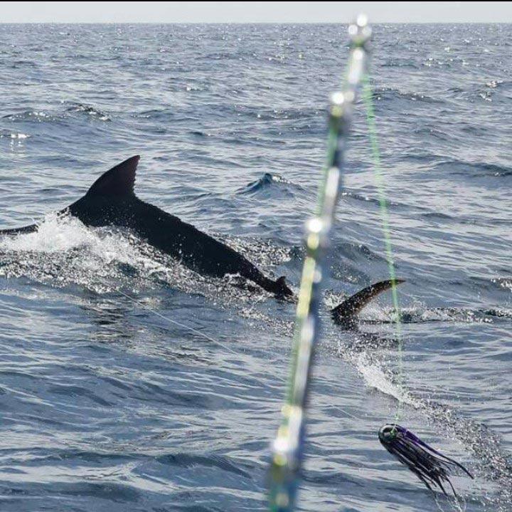 fishing reports 20180115 marlin tuna wahoo swordfish ecuador galapagos manta 02