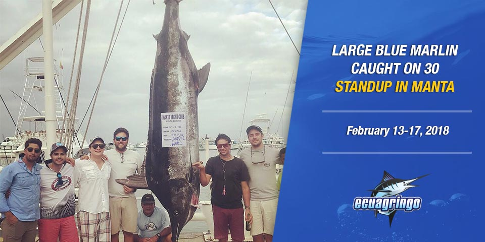 Large blue marlin caught on 30 standup in Manta