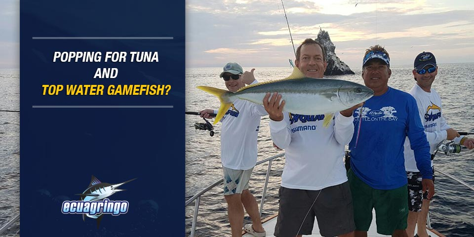 newsletters 20180217 popping for tuna top water gamefish 01