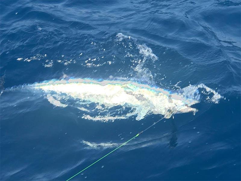fishing reports 20180319 marlin tuna wahoo swordfish ecuador galapagos manta 02
