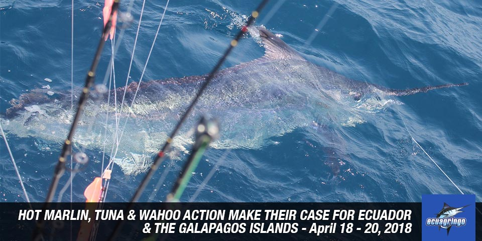 fishing reports 20180421 marlin tuna wahoo-swordfish-ecuador galapagos manta 01
