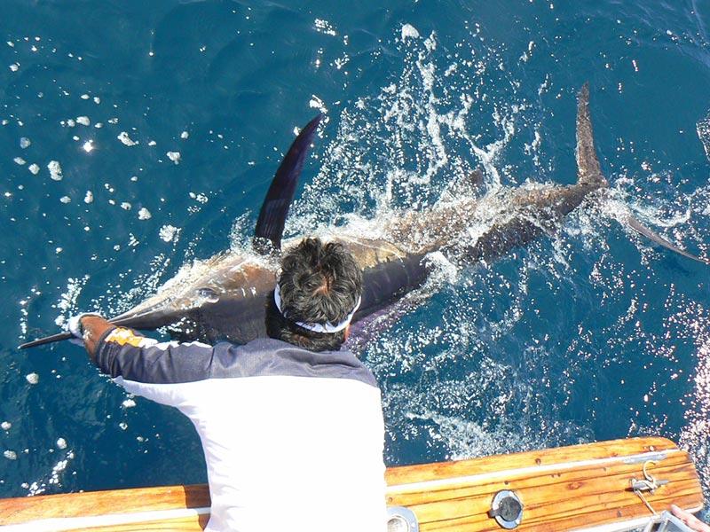 fishing reports 20180509 marlin tuna wahoo swordfish ecuador galapagos manta 03