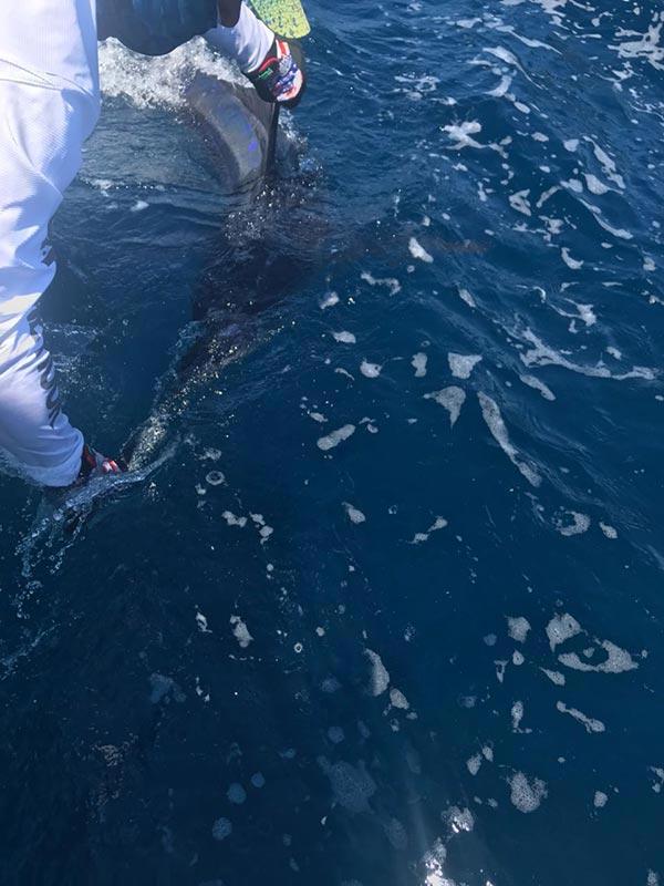 fishing reports 20180525 marlin tuna wahoo swordfish ecuador galapagos manta 03