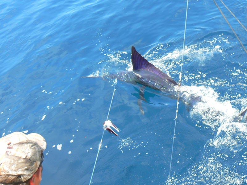 specials 20180511 may fishing adventures specials 02