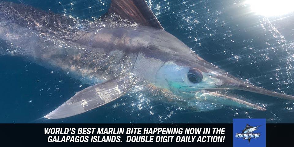 fishing reports 20180601 marlin tuna wahoo swordfish ecuador galapagos manta 00