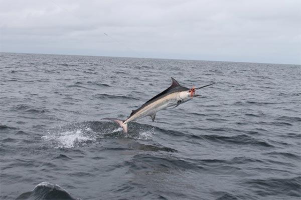 fishing reports 20180612 marlin tuna wahoo swordfish ecuador galapagos manta 01