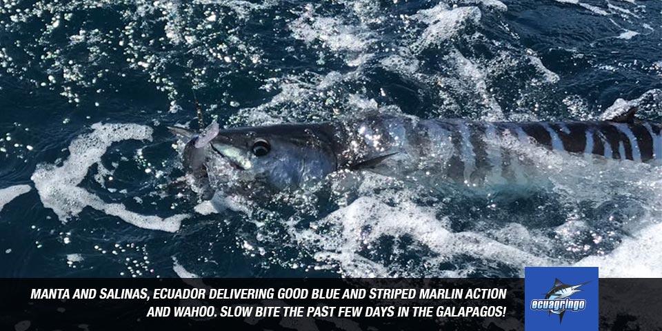 fishing reports 20180802 marlin tuna wahoo swordfish ecuador galapagos manta 00