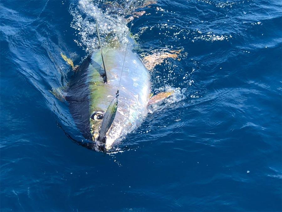 promotions tuna bite fishing 04